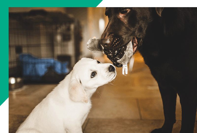 About Veterinary Recruitment